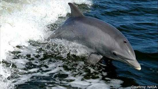 Biologists find trash in belly of stranded baby dolphin