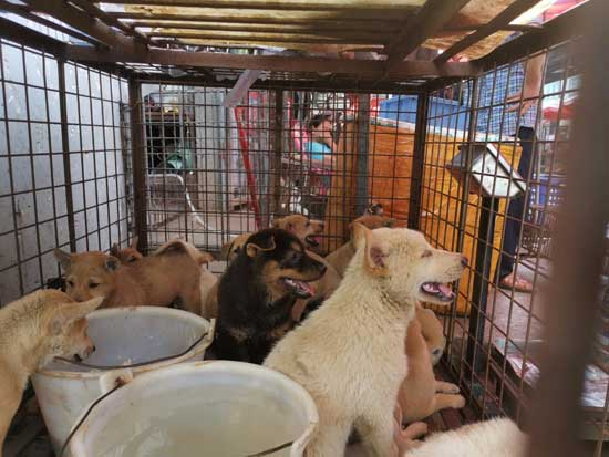 Dogs are seen in a cage at a dog meat market in Yulin, Guangxi Zhuang Autonomous Region, China June 2020 in this handout provided on June 22, 2020. Humane Society International/Handout via REUTERS THIS IMAGE HAS BEEN SUPPLIED BY A THIRD PARTY. MANDATORY CREDIT. NO RESALES. NO ARCHIVES.