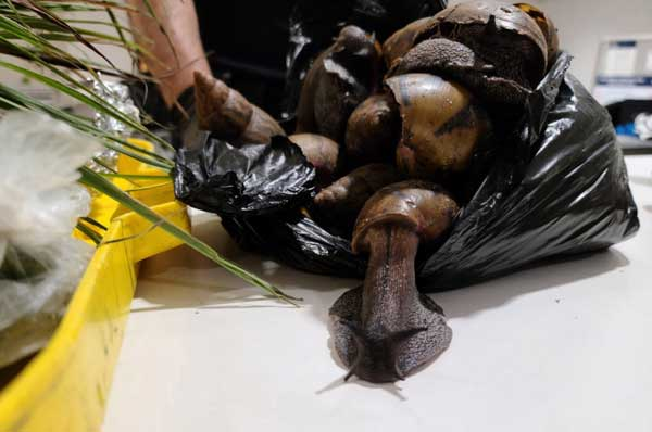 22 Giant African Snails were seized by US Customs and Border agents at JFK Airport. CBP