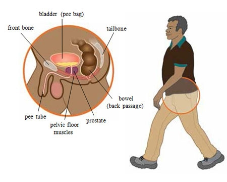 PROSTRATE HEALTH AWARENESS, SOME OF THE THINGS YOU NEED TO KNOW