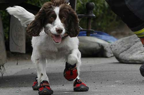 Zurich: Swiss police urge owners to put dogs in shoes during heatwave